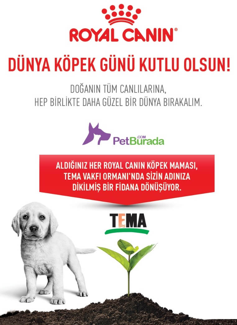 petburada royal canin